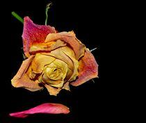 la rose by sylvie bouzana léandre