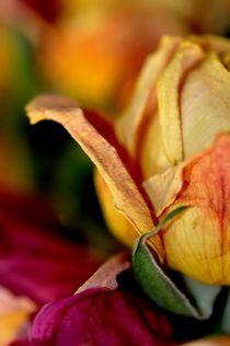rose by sylvie bouzana léandre