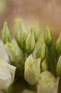 Weiße Blumen / 1 by Heidi Bollich