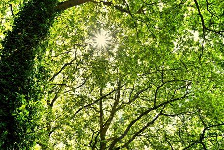 Wald-1001d