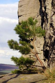 lonely tree 2 von ir-md