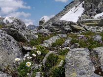 Blumen am Berg von Marco Marohn