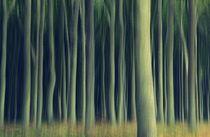.. im Gespensterwald .. von gugigei