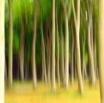 .. Bewegung im Gespensterwald .. by gugigei