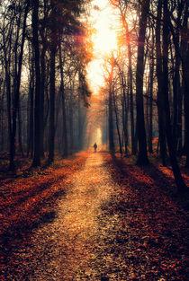 Spaziergang durch den Wald von Frank Mitchell