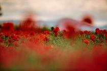 Summer Poppy Meadow von Nailia Schwarz