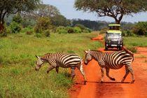 Zebras brauchen keinen Zebrastreifen by ann-foto
