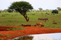 Die Savanne in Tsavo East von ann-foto