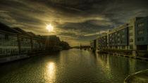 Gloucester-golden-glow