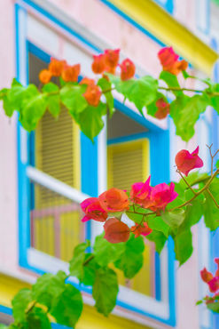 Colored-flowers-in-front-ot-windows-house-print