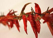 red hot chili - verdammt scharf by Martina Lender-Frase