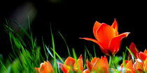 Der Frühling kommt .. von gugigei