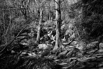 Becky Falls, Devon. von David Hare