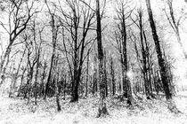 Monochrome Snow Forest Art by David Pyatt