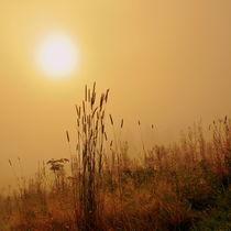 Gräser im Morgenlicht von gugigei