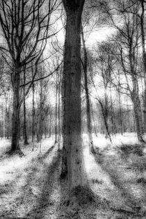 The Forest of Ghosts von David Pyatt
