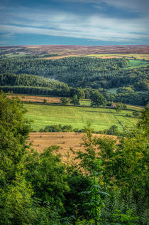 Surprise View by Colin Metcalf