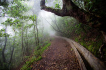 Misty way by Sergey Tsvetkov