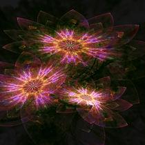 Flower 0001 by zsuzsa