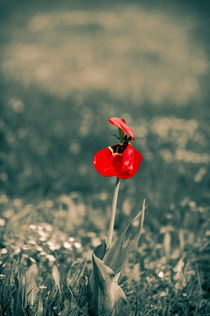 Lonely Red Flower von cinema4design