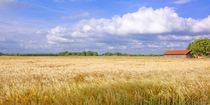 Sommertag - Panoramaformat by gscheffbuch
