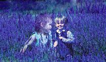 Amongst the lavender von sylvia scotting