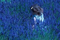 Lavender Field von sylvia scotting