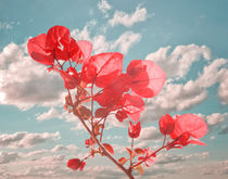 Flower in the Sky Photo Collage by Daniel Ferreira Leites Ciccarino