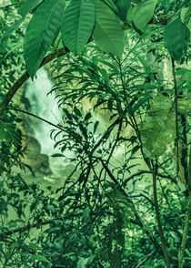 Jungle Detail at Iguazu Park Photo von Daniel Ferreira Leites Ciccarino