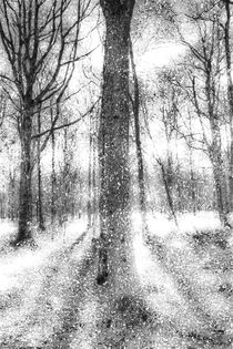 Forest Of Ghosts And Snow by David Pyatt