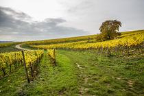 Weinberg im Herbst 3 by Erhard Hess