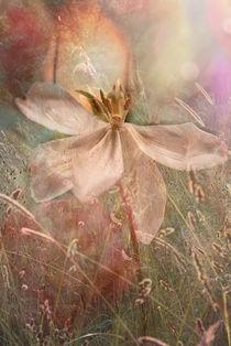 Img-tulpe-im-fruhlingslicht
