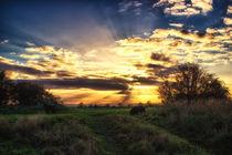 Last Light von Vicki Field