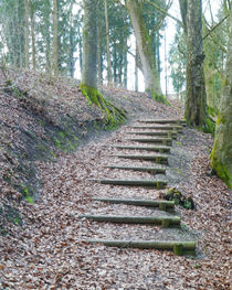 Steps in a wood by Michael Naegele
