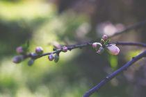 Flowers buds, freshness spring von Maria Dattola
