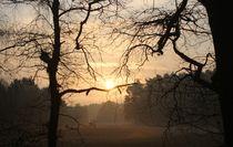 Morgensonne von Simone Marsig