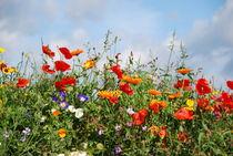 Blumenwiese von gugigei