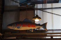 fish and fish products von Iulian  Preda