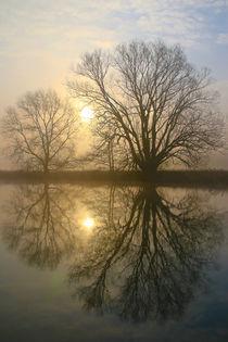 Nebel, Licht und Bäume 6 von Bernhard Kaiser