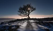 Winter tree von Leighton Collins