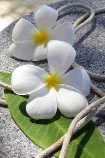 Tropische Blume von Thomas Brandt