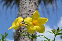 Tropische Blume by Thomas Brandt