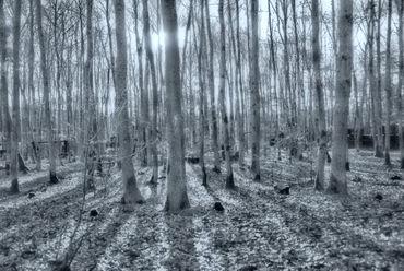 Wald-sw