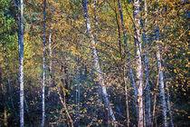 Lost in Leaves by Vicki Field