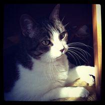 Relaxing cat  von Azzurra Di Pietro