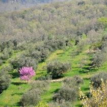 Frühling in der Toskana von gugigei