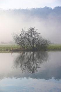 Nebel, Licht und Bäume 8 by Bernhard Kaiser
