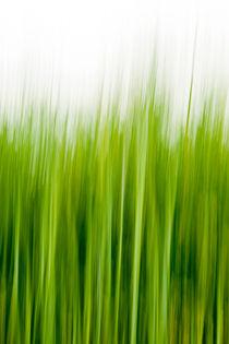 Gras-Wusch von STEFARO .