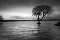 Kenfig Pool and tree von Leighton Collins