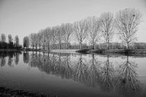 Bäume im Spiegel by Stephan Gehrlein